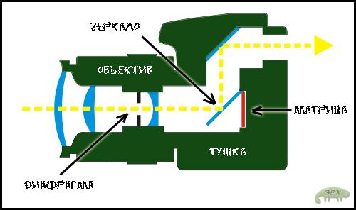 Схема в разрезе цифрового